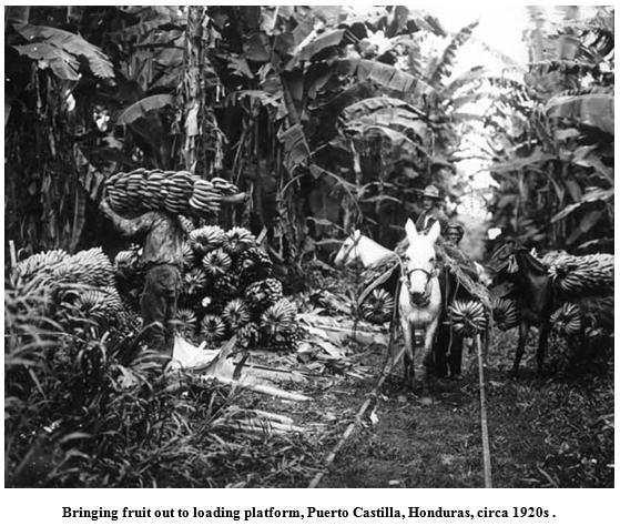 hauling fruit in Honduras