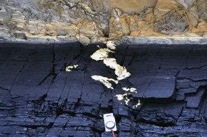antarctic coal 3