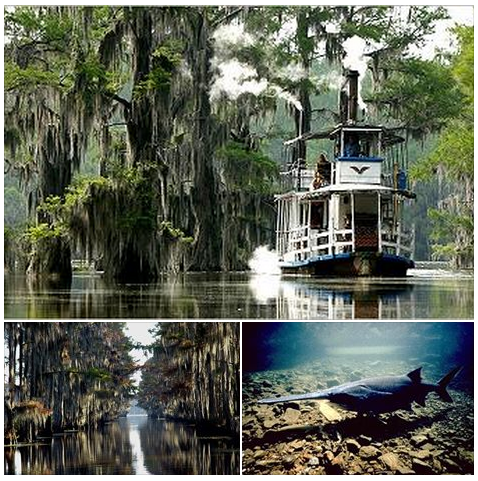 Discover the natural beauty of Caddo Lake, the only natural lake in all of Texas