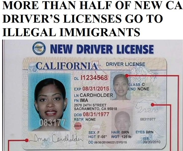 more than half of new california driver licenses to illegal immigrants